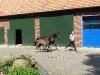 2015_0628-recker-pony.jpg